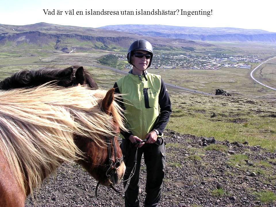 Vad är väl en islandsresa utan islandshästar Ingenting!