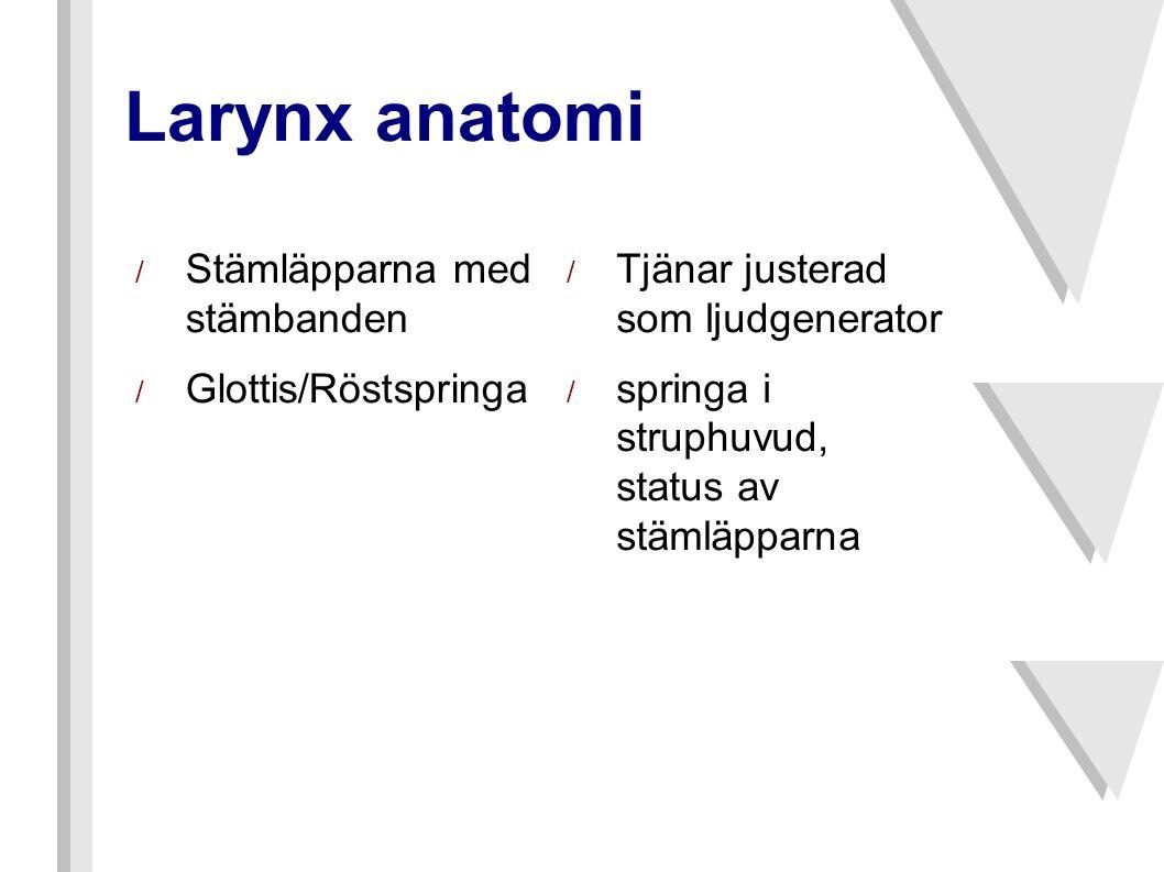 Larynx anatomi Stämläpparna med stämbanden Glottis/Röstspringa