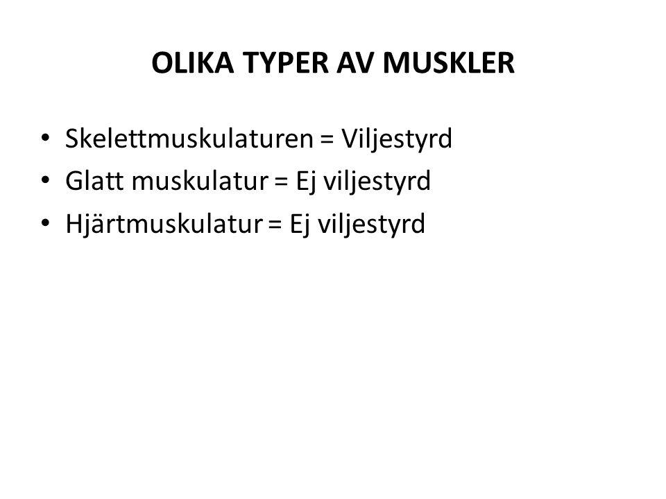 OLIKA TYPER AV MUSKLER Skelettmuskulaturen = Viljestyrd