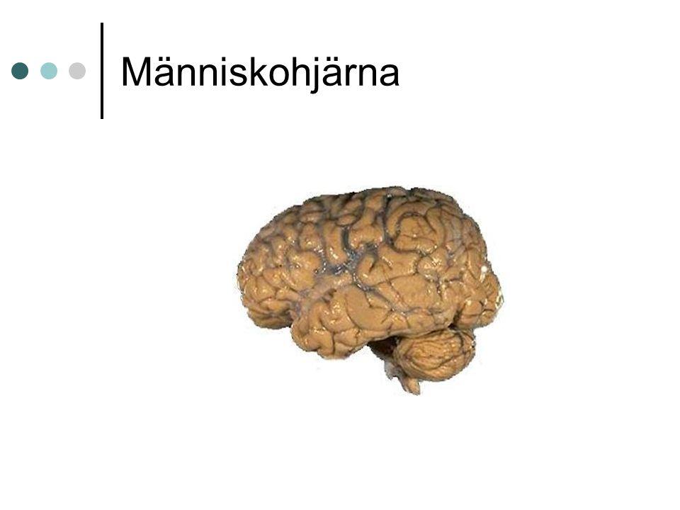 Människohjärna
