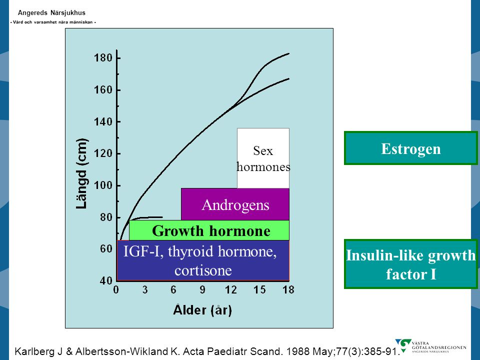 Estrogen Growth hormone Insulin-like growth factor I