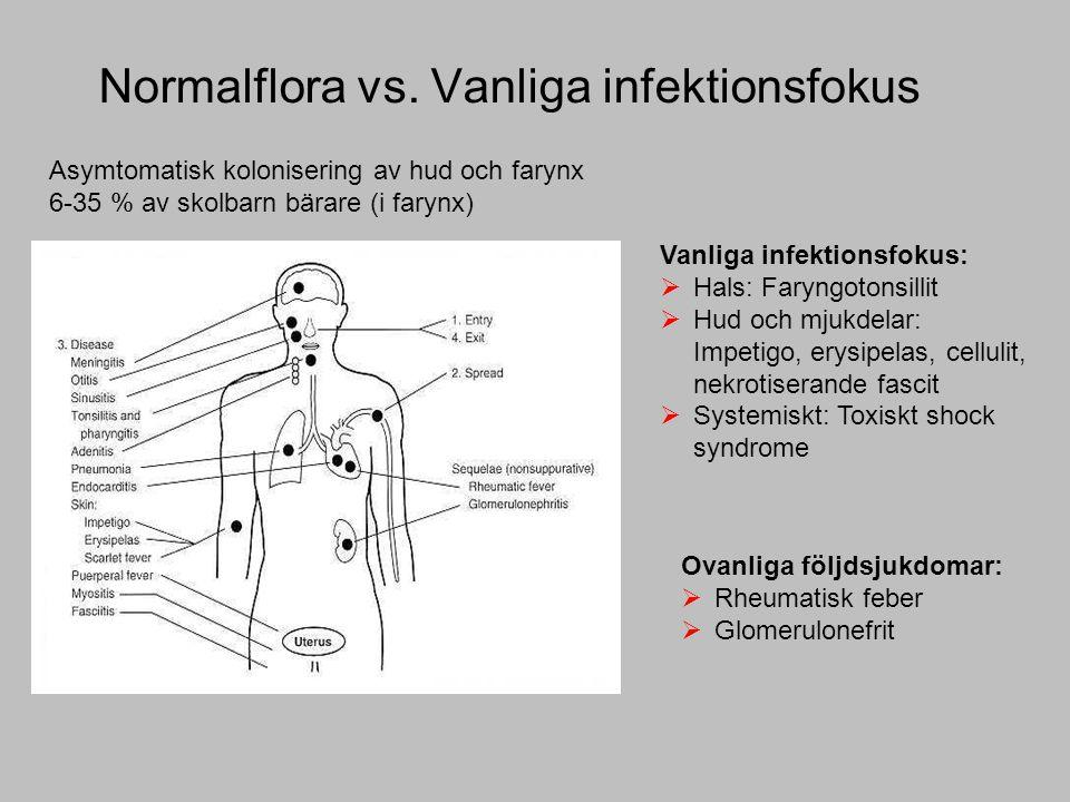 Normalflora vs. Vanliga infektionsfokus