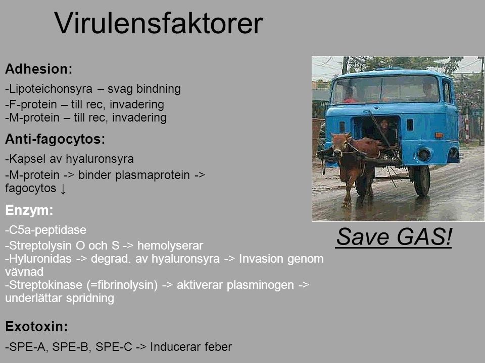 Virulensfaktorer Save GAS! Adhesion: Anti-fagocytos: Enzym: Exotoxin: