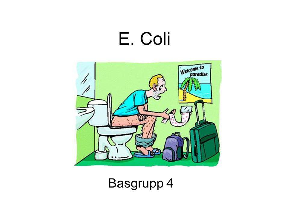 E. Coli Basgrupp 4