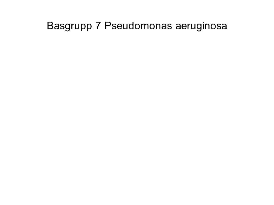Basgrupp 7 Pseudomonas aeruginosa