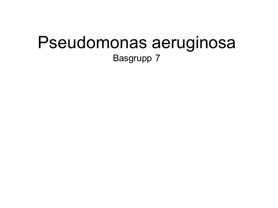 Pseudomonas aeruginosa Basgrupp 7
