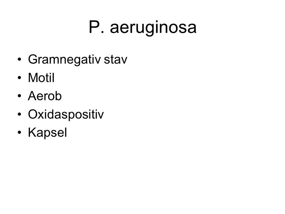 P. aeruginosa Gramnegativ stav Motil Aerob Oxidaspositiv Kapsel