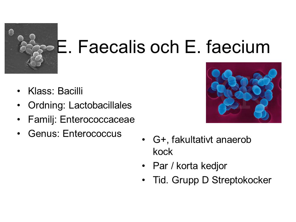 E. Faecalis och E. faecium