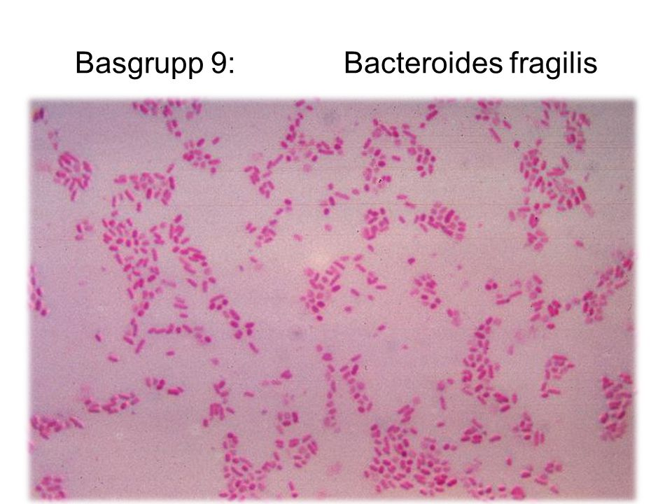 Basgrupp 9: Bacteroides fragilis