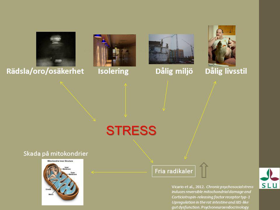 STRESS Rädsla/oro/osäkerhet Isolering Dålig miljö Dålig livsstil
