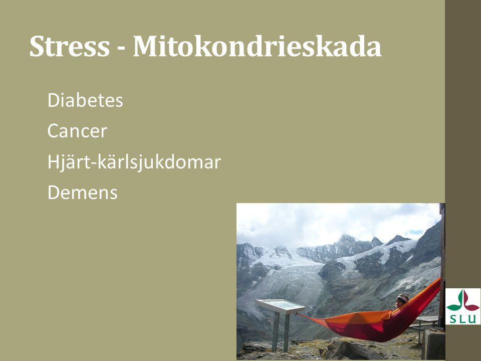 Stress - Mitokondrieskada
