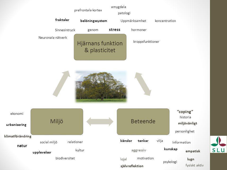 Hjärnans funktion & plasticitet