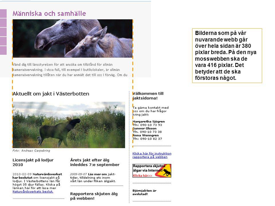 Bilderna som på vår nuvarande webb går över hela sidan är 380 pixlar breda.