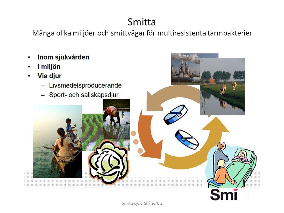 Smitta Många olika miljöer och smittvägar för multiresistenta tarmbakterier
