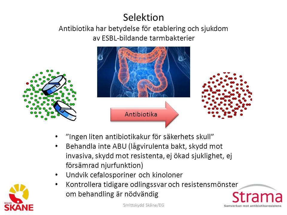 Selektion Antibiotika har betydelse för etablering och sjukdom av ESBL-bildande tarmbakterier