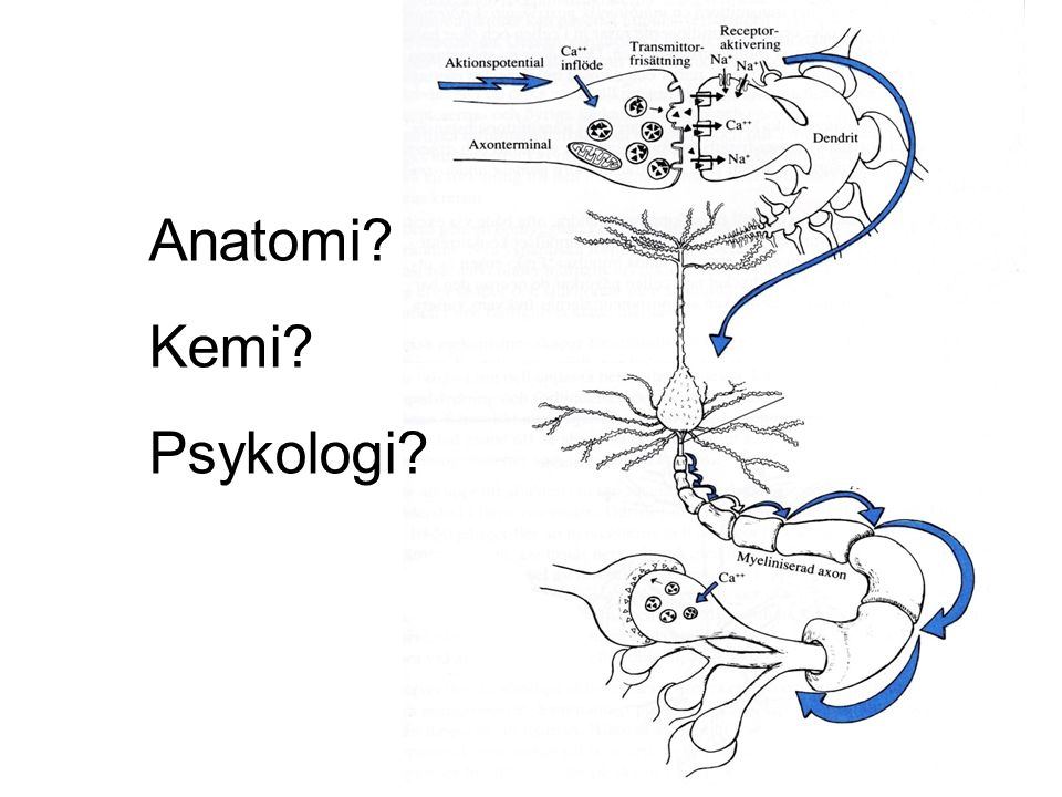 Anatomi Kemi Psykologi Lena Wallmark / NPF 2009