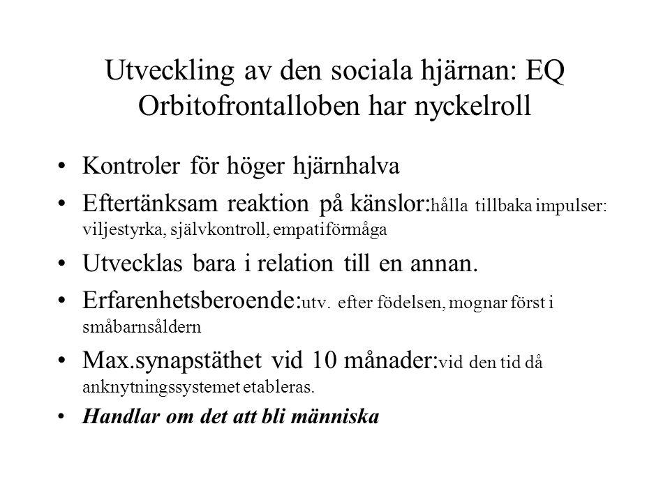 Utveckling av den sociala hjärnan: EQ Orbitofrontalloben har nyckelroll