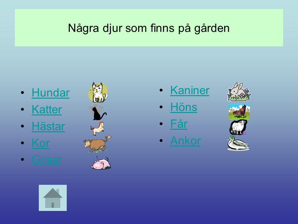 Några djur som finns på gården