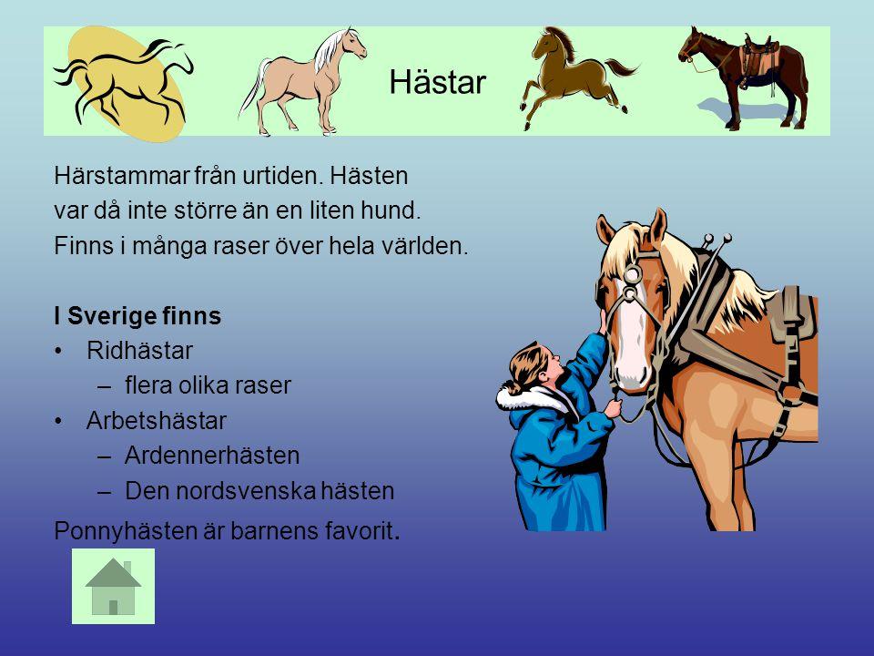 Hästar Härstammar från urtiden. Hästen