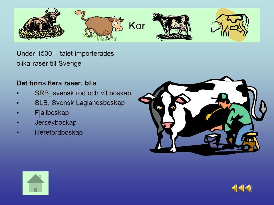 Kor Under 1500 – talet importerades olika raser till Sverige