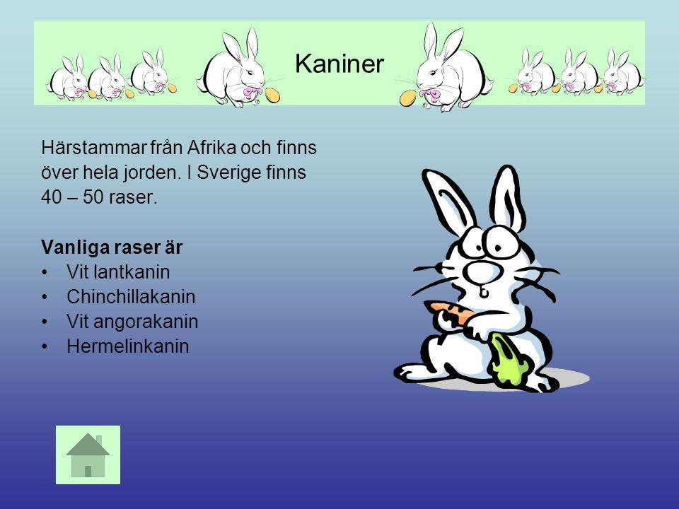 Kaniner Härstammar från Afrika och finns