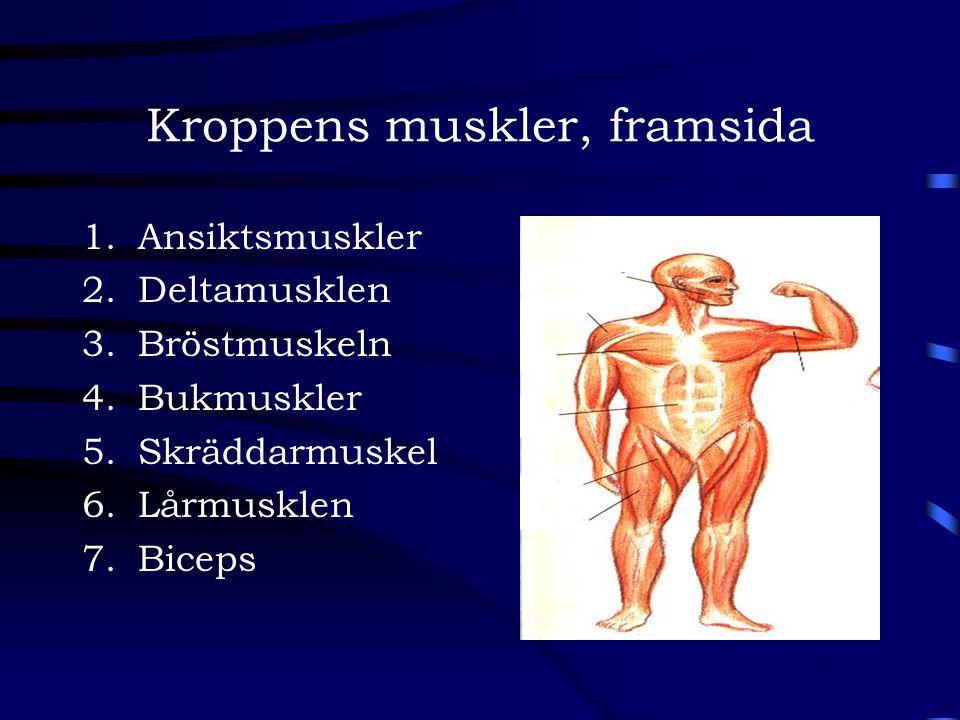 Kroppens muskler, framsida