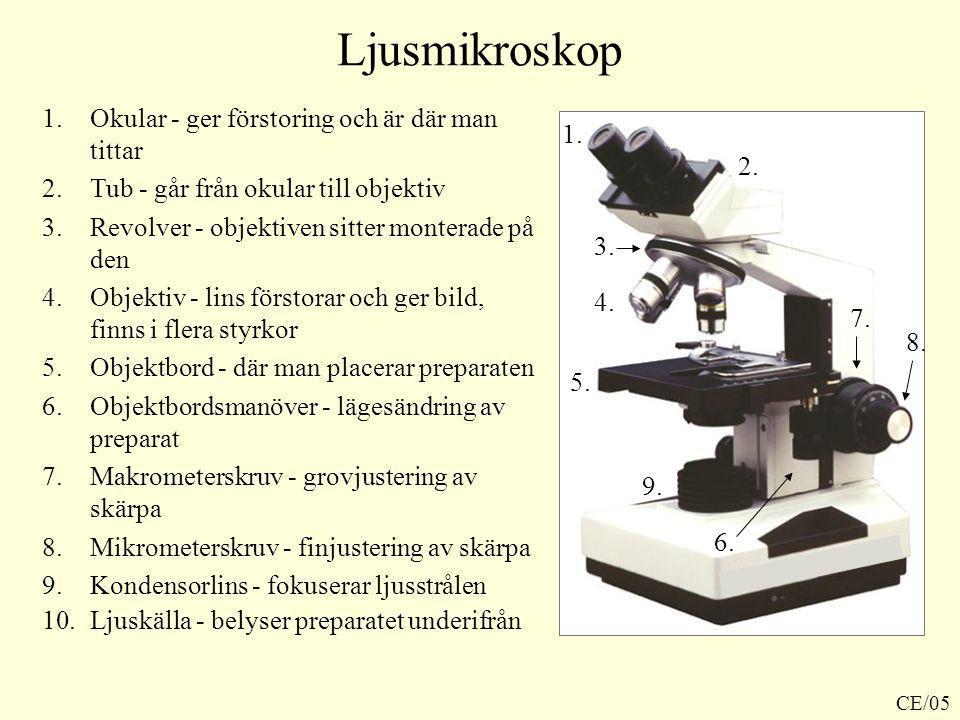 Ljusmikroskop Okular - ger förstoring och är där man tittar 1.