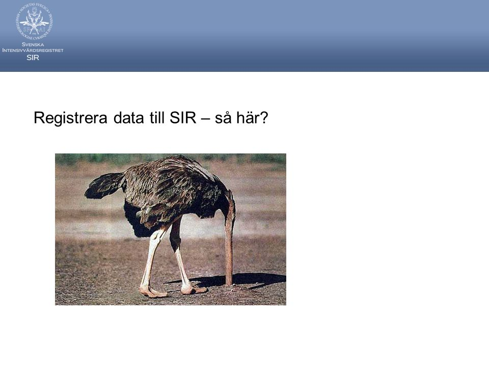 Registrera data till SIR – så här
