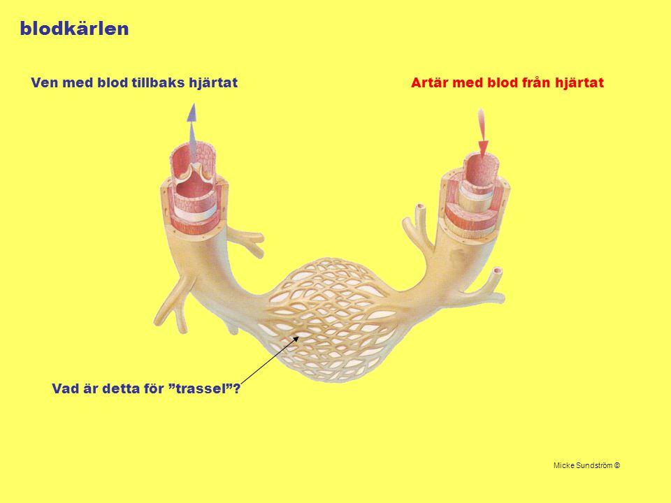 blodkärlen Ven med blod tillbaks hjärtat Artär med blod från hjärtat