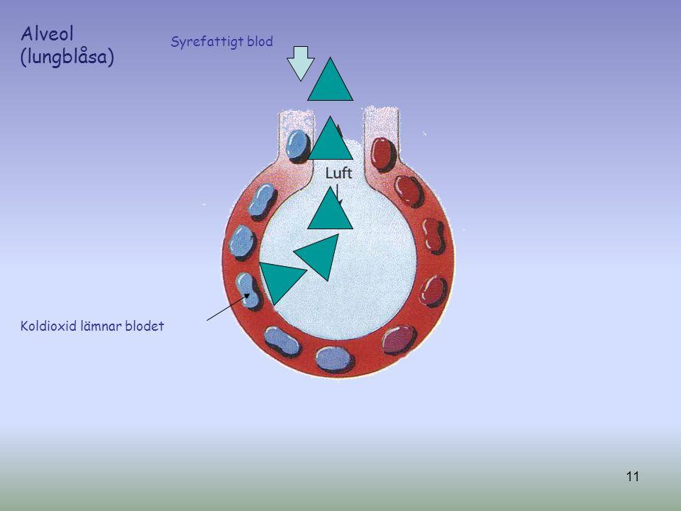 Alveol (lungblåsa) Syrefattigt blod Koldioxid lämnar blodet