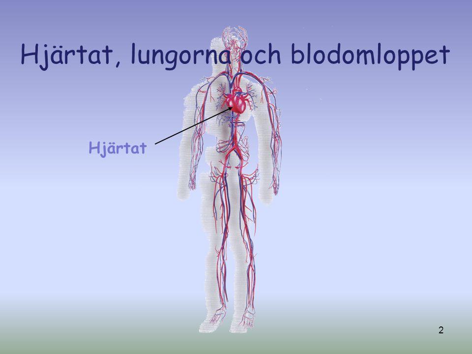 Hjärtat, lungorna och blodomloppet