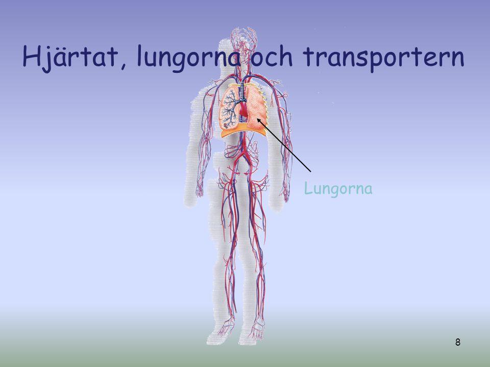 Hjärtat, lungorna och transportern