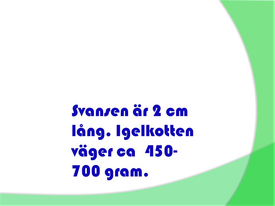 Svansen är 2 cm lång. Igelkotten väger ca 450-700 gram.
