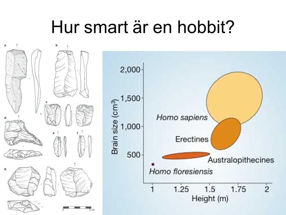 Hur smart är en hobbit