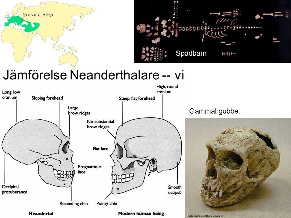 Jämförelse Neanderthalare -- vi