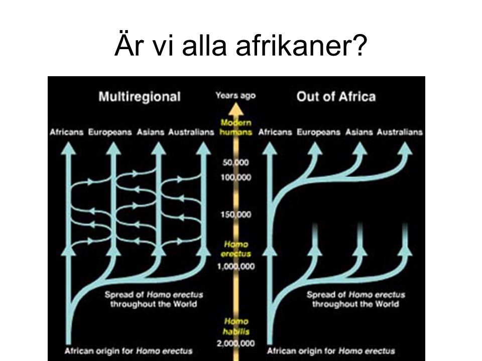 Är vi alla afrikaner