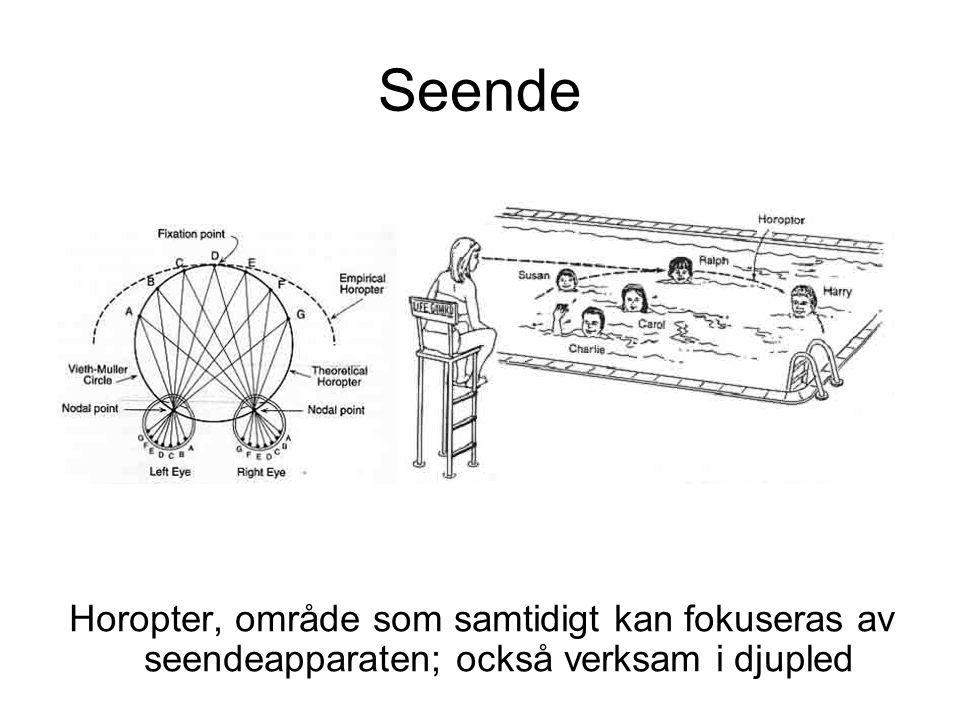 Seende Horopter, område som samtidigt kan fokuseras av seendeapparaten; också verksam i djupled
