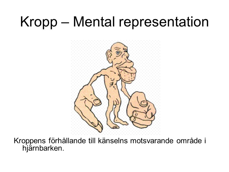 Kropp – Mental representation