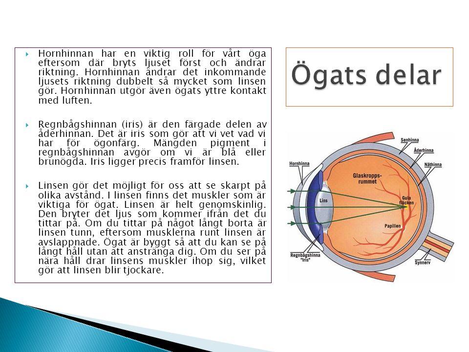 Hornhinnan har en viktig roll för vårt öga eftersom där bryts ljuset först och ändrar riktning. Hornhinnan ändrar det inkommande ljusets riktning dubbelt så mycket som linsen gör. Hornhinnan utgör även ögats yttre kontakt med luften.