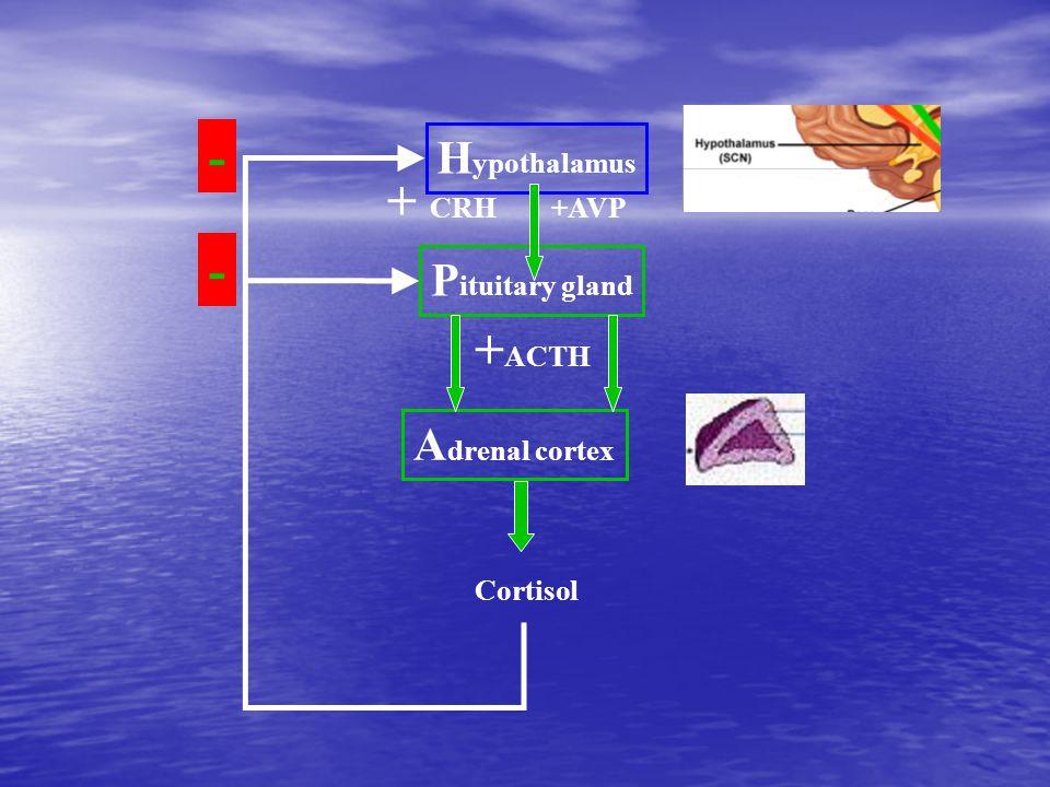- + CRH - +ACTH Hypothalamus Pituitary gland Adrenal cortex +AVP