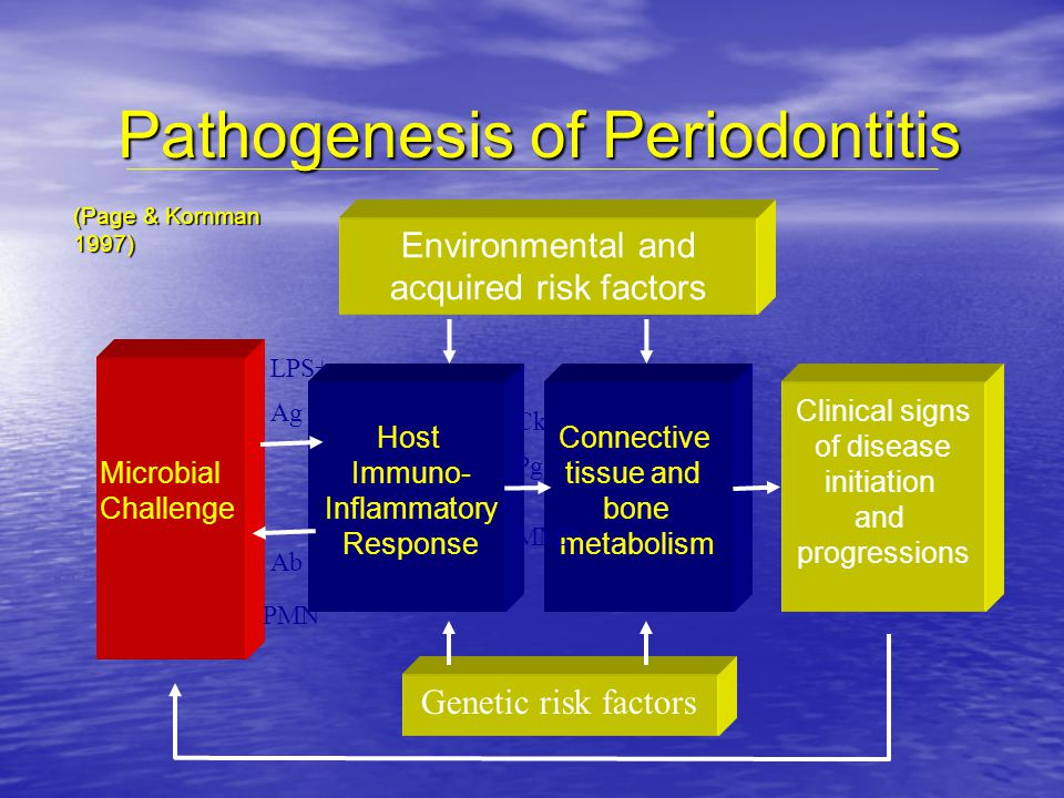 Pathogenesis of Periodontitis
