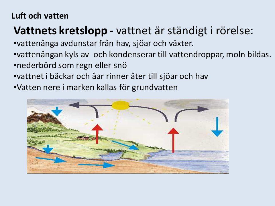 Vattnets kretslopp - vattnet är ständigt i rörelse: