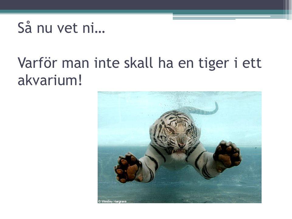 Så nu vet ni… Varför man inte skall ha en tiger i ett akvarium!