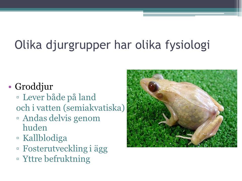 Olika djurgrupper har olika fysiologi