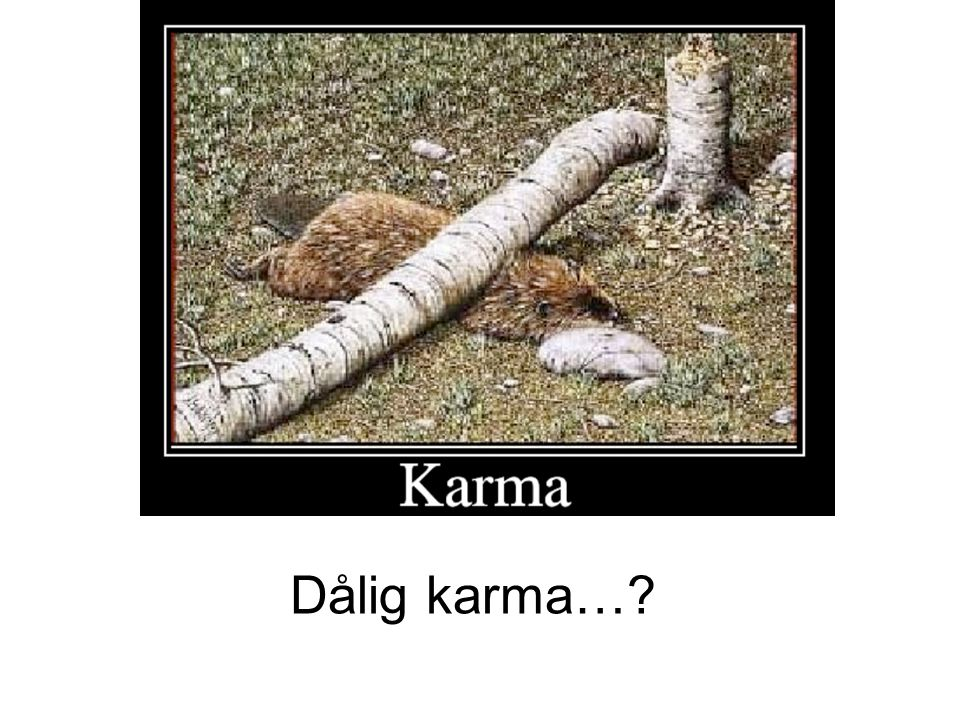 Dålig karma…