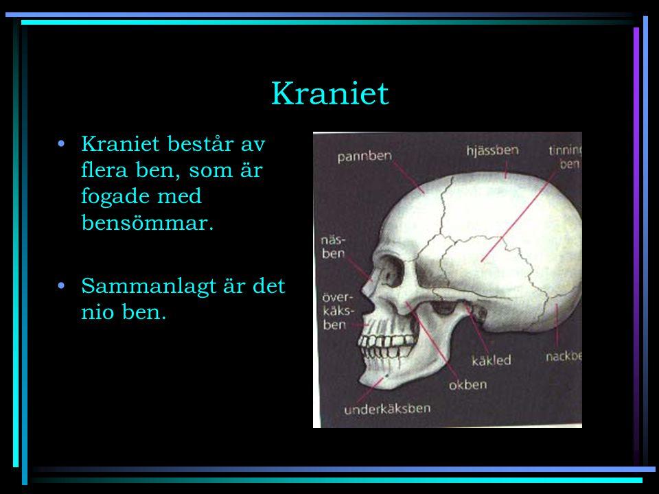Kraniet Kraniet består av flera ben, som är fogade med bensömmar.