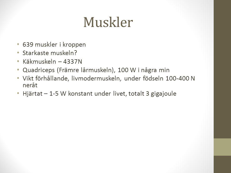 Muskler 639 muskler i kroppen Starkaste muskeln Käkmuskeln – 4337N