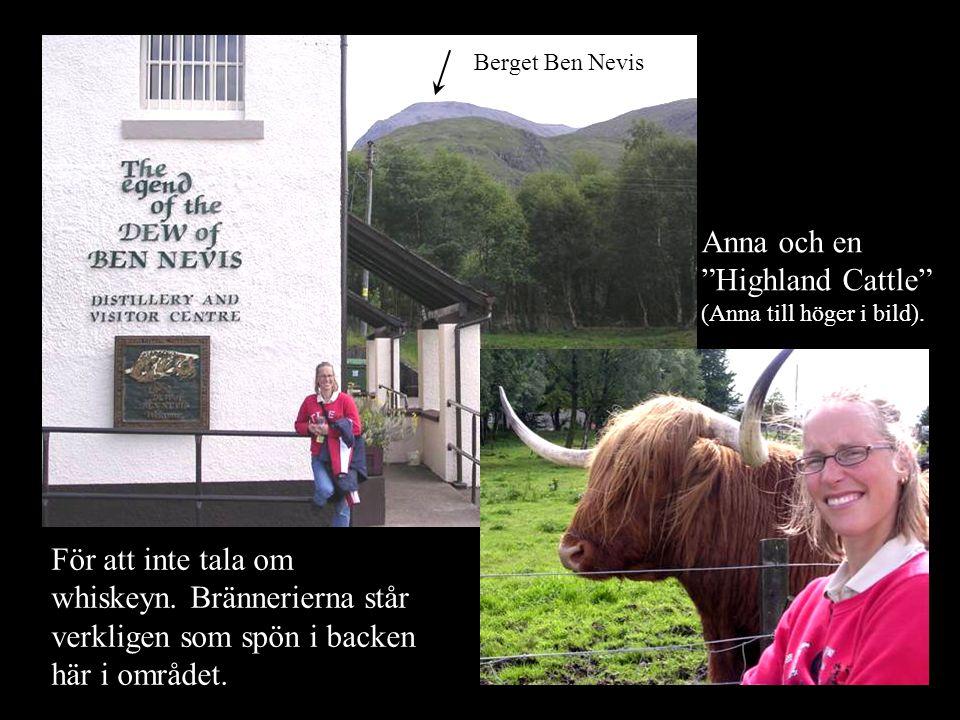 Anna och en Highland Cattle (Anna till höger i bild).