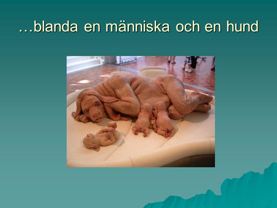 …blanda en människa och en hund