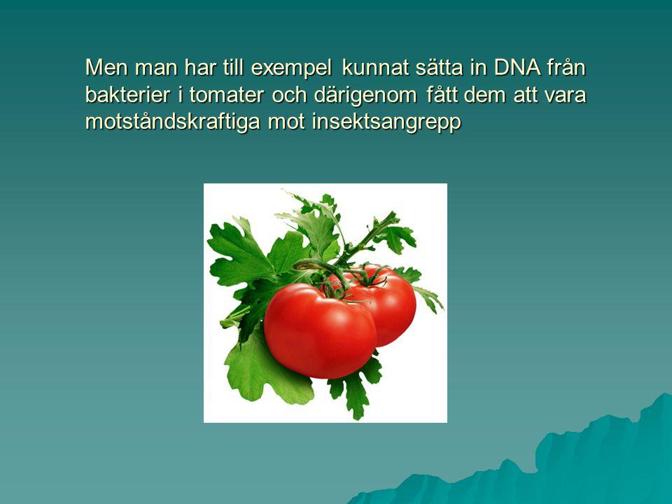 Men man har till exempel kunnat sätta in DNA från bakterier i tomater och därigenom fått dem att vara motståndskraftiga mot insektsangrepp